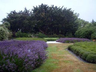 Lavender Farm1